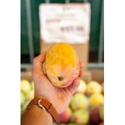 Полезные свойства масло манго - средство для красоты кожи и волос.